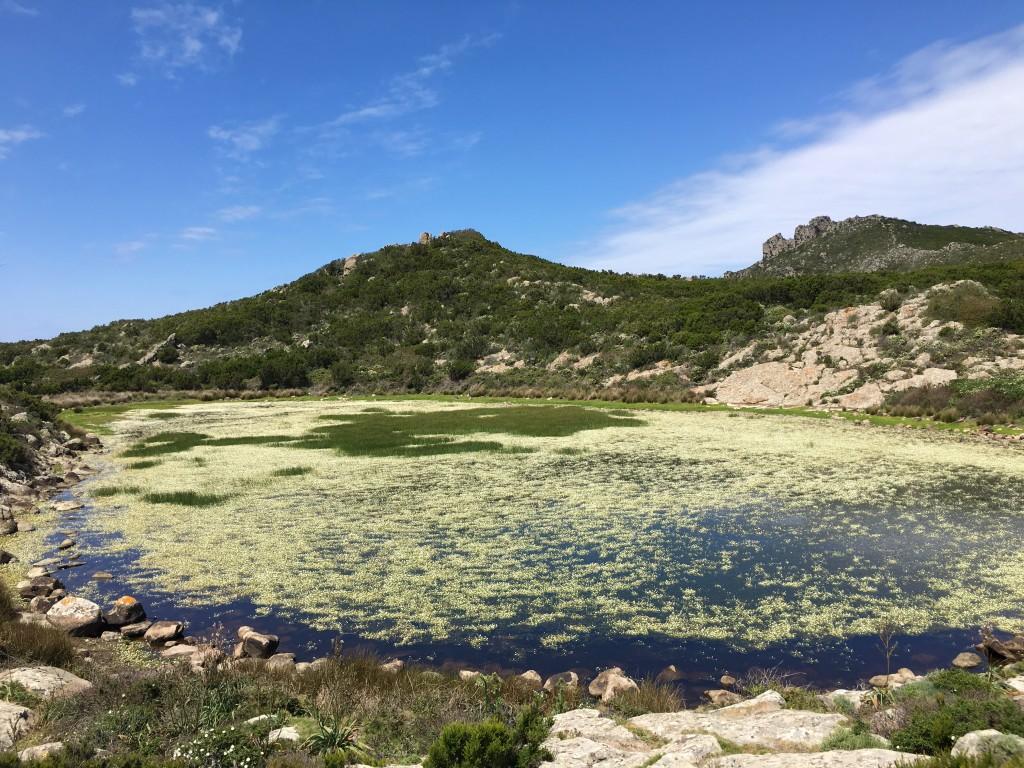 Isola di capraia, lago interno
