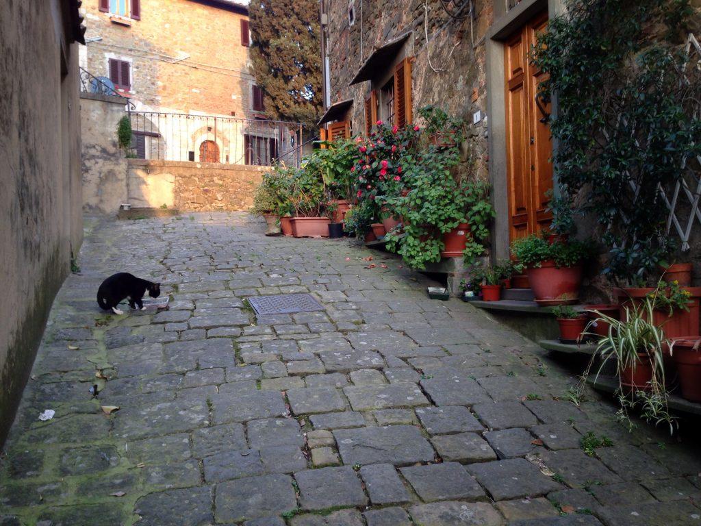 montecatini alto gatto