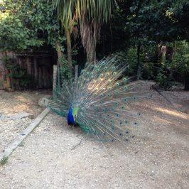 Il Giardino Zoologico di Pistoia