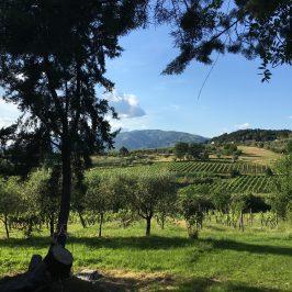Viavinaria: cantine aperte e degustazioni a Montecarlo